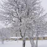 """""""winter"""" by shellyann26"""