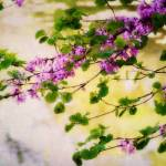 """branch with lilac flowers"" by phototarget"