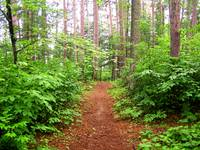 Northern Minnesota