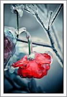 Iced roses_03