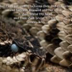 """animal reptile snake enmity gen 3-15 s_01"" by BrianDunne"