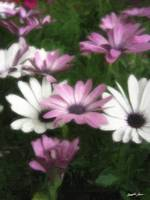 Purple and White Daisies 3 Painterly