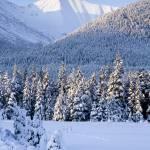 """""""AKS401SCAA0030"""" by AlaskaStock"""