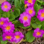 """""""Pretty Purple"""" by markwuttke"""