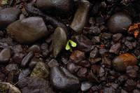 ROCK AND LEAF -