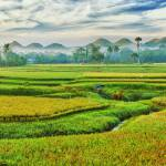 """Paddy rice panorama"" by MotHaiBaPhoto"
