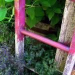 """Garden Ladder"" by JenniferLaskerWhite"