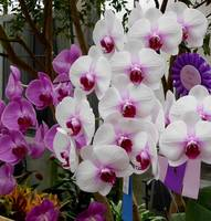 ORCHID SHOW GARFIELD PARK