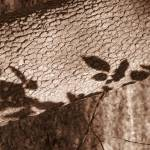 """leaf shadows on tree trunk"" by HeatherLanza"