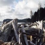 """""""Rialto-driftwood"""" by MaureenReilly"""