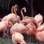 """Pink Flamingos"" by memoriesoflove"