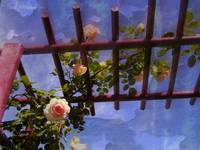 Laura's Rose Trellis 1