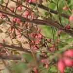 """Spring Bush"" by sarahme220"