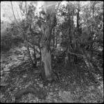 """Cedar Roughs"" by eyesea"