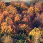 """Autumn trees"" by Hevans"
