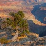 """landscape grand canyon arizonaarizonaDSC_7701-1"" by BrianDunne"
