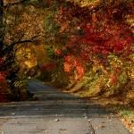 """landscape lvesroad3"" by BrianDunne"