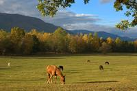 landscape mountain appalachia horse animal mamal