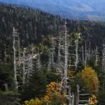"""""""landscape mountain road DSC_5140"""" by BrianDunne"""