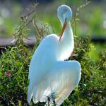 """EGRET BUSINESS CARD"" by images59"