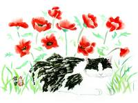 Black and White and Red Poppies