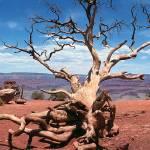 """Grand_Canyon_Tree"" by Jason_Speer_Photo"