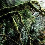 """""""Praying Mantis Tree"""" by spike"""