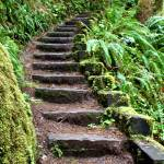 """""""Wooded Staircase"""" by spike"""