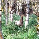 """""""Elk"""" by spike"""