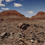 """Petrified Forest"" by Jason_Speer_Photo"