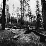 """""""Yosemite Wawona Panoramic"""" by Jason_Speer_Photo"""