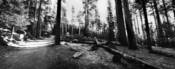 Yosemite Wawona Panoramic