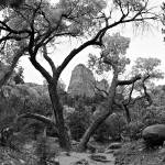 """Zion National Park Kolob Tree"" by Jason_Speer_Photo"