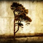 """Lone Tree"" by Juliec21"