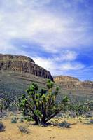 ARIZONA GRD CANYON-888 (2)