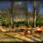 """""""Zoo- Barcelona"""" by antoni63"""