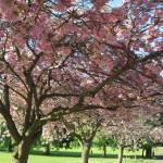 """""""April in Harrogate"""" by leyla"""