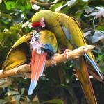 """Parrots Helping Parrots"" by BrendanClark"