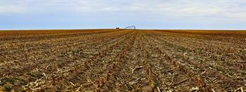 Grand Island Grain Panoramic