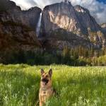 """Cody At Yosemite"" by pbk"