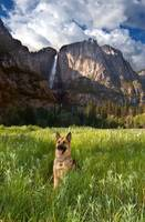 Cody At Yosemite