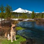 """Cody Near Mount Bachelor, Oregon"" by pbk"