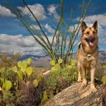 """Cody At Tucson, AZ"" by pbk"
