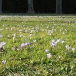"""""""Spring in the Boboli Gardens"""" by ERMPrints"""