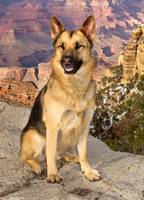 CODY AT THE GRAND CANYON