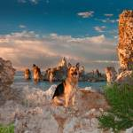 """Cody At Mono Lake"" by pbk"