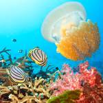 """""""Butterflyfishes and jellyfish"""" by MotHaiBaPhoto"""