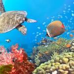 """""""Underwater panorama"""" by MotHaiBaPhoto"""