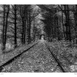 """""""Track Through a Forest"""" by aknbean"""