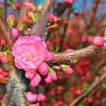 """""""Flowering spring tree"""" by qiiip"""
